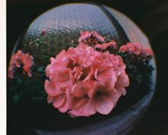 "The new #Lomography Fisheye Baby 110 in color. Sample picture. Taken by ""webo29"""