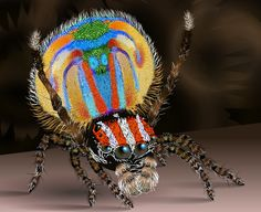 Peacock Spider As is the case with many animals in the animal kingdom, these guys use their beautiful colors to try and attract a mate. Like a peacock, this spider will flash some color and dance around. Cool Insects, Bugs And Insects, Weird Insects, Poisson Mandarin, Beautiful Creatures, Animals Beautiful, Male Peacock, Cool Bugs, Jumping Spider