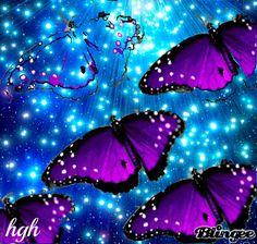 Butterfly Metamorphosis. #Gif