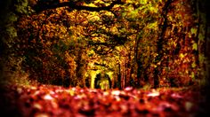 playing with some Instagram like filters - a forest next to Magdeburg, Germany in autumn