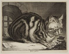 Cat Sleeping | Cornelius Visscher