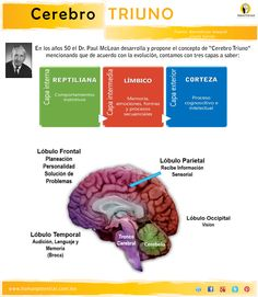 El modelo Cerebro Triuno concibe al ser humano como un ser que esta constituido por múltiples capacidades interconectadas y complementarias, de allí su carácter integral y holístico que permite exp...