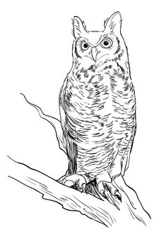 How to Draw a Realistic Owl – Sketchbook Challenge 48                                                                                                                                                                                 More
