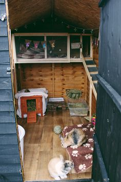 Rabbit shed - Rabbit Hutches: Outdoor & Indoor Rabbit Hutche Models Bunny Sheds, Rabbit Shed, Rabbit Run, Pet Rabbit, Diy Bunny Cage, Bunny Cages, Rabbit Cages, Rabbit Enclosure, Reptile Enclosure