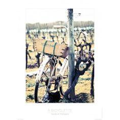 Poster photo Bicyclette dans les vignes - Ile de Ré Guillaume Plisson Poster Photo, Photos, Grape Vines, Bicycle Kick, Pictures