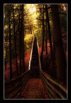 The Stairway by Mike Broadwater  At Iargo Springs, Oscoda, MI