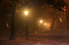 'Fall' into this soothing soundtrack of Autumn leaves hurling through the late night. We invite you to mellow down to the sounds of crunching leaves, howling winds and chirping birds. Autumn Aesthetic, Night Aesthetic, Aesthetic Videos, Autumn Photography, Night Photography, Concept Photography, Photography Aesthetic, Ocean Photography, Travel Photography