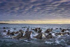 Kent Marina havet Squirt