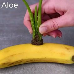 We're rooting for these 12 clever plant hacks! step-up your plant game with the . - We're rooting for these 12 clever plant hacks! step-up your plant game with the plant stand vi - Diy Crafts Hacks, Diy Home Crafts, Plant Crafts, Garden Yard Ideas, Garden Projects, Garden Bed, Garden Table, Garden Planters, Garden Ideas Videos