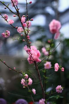 pinkblumen: {❀} / SelenaAdorian