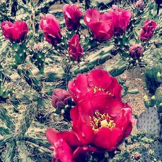 prickly flowers