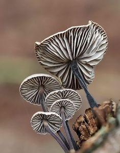 Грибы в качестве импульса для творчества? Кому-то это покажется странным и скучным, но только не тем, кто придумывает, например, все новые и новые бусины из полимерной глины. Формы и цвета грибов удивляют и наталкивают на разные необычные решения. Особенно это касается экзотических видов — таких, которых мы никогда не видели или которых просто не замечали, пока в лесу не появился любопытный фотограф с инструментами для макросъемки.