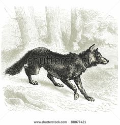 "Wolf - Vintage engraved illustration - ""Cent récits d'histoire naturelle"" by C.Delon published in 1889 France by lynea, via Shutterstock"