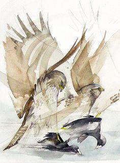 Walty Dudok van Heel - buizerd - common buzzard