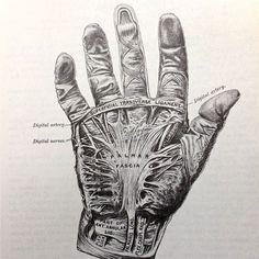 Vintage anatomical drawing medical illustration skeleton of the hand ...