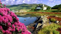 Beautiful Flowers On Hills