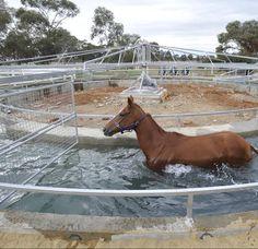 diy horse walker plan - Google Search