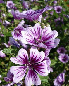 Langbloeiers - bloemen die wel 4 maanden bloeien