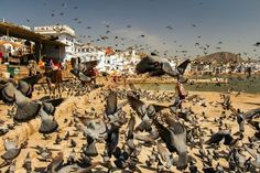 Living in Harmony Photo by Abhishek Chaudhary — National Geographic Your Shot