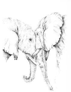 Elephant Love. Pen & Ink  Illustration   Gabrielle Edgerton