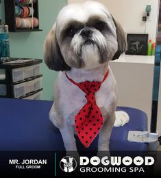 Mr. Jordan is in the house for a Full Groom @ Dogwood Grooming Spa - Knoxville!  Visit our website @ dogwoodgroomingspa.com or Call us at (865) 297-4277 to book an appointment for your pet!  #dogwood #dogwoodgroomingspa #creativegroomer #petstylist #petgroomerknoxville #petgroomer #petgrooming  #doggrooming #doggroomer  #cityspotz #knoxville #knoxvilletn #knox