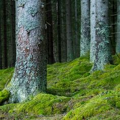 Finnish forest, Suomussalmi, Finland.