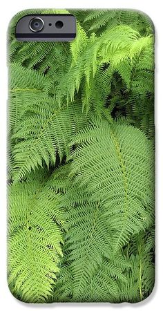 Soft ferns IPhone Case for Sale by Sverre Andreas Fekjan Cell Phone Covers, Iphone 6 Cases, Computer Skins, Ferns, Plant Leaves, Presentation, Shell, Profile, Slim