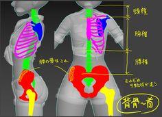 6日:索具①了解〜人体结构〜|〜CharacterArpeggio 3ds Max的2017年个性创造手术〜|地区日本