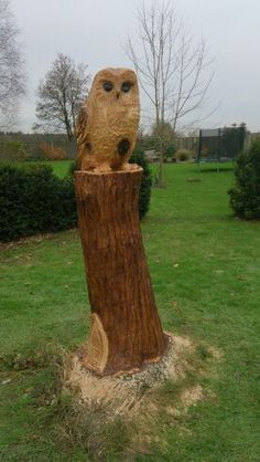 Owl chainsaw carving, carved from a Turkey Oak stump.