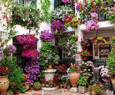 Garden of container gardens.....love