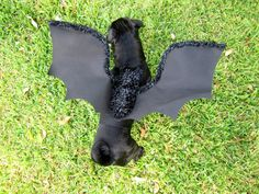 pet costume bat costume black wings dog cat by PerfectPartyParade, $18.00