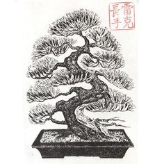 trees sketch Golden Pavilion Pine Bonsai Handmade Etching by Ronald Ray Reekers Bonsai Print Drawing Tree Sketches, Tree Drawings, Bonsai Tree Tattoos, Evergreen Tree Tattoo, Japanese Bonsai Tree, Christmas Tree Silhouette, Geometric Sleeve Tattoo, Tree Of Life Painting, Japanese Drawings
