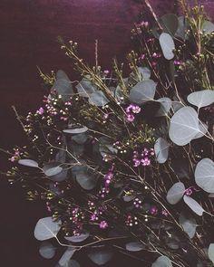 Eucalyptus and Waxflower bouquet Floral Wedding, Wedding Bouquets, Wedding Flowers, Flower Boquet, Flower Art, Wax Flowers, Dried Flowers, Flower Power, Floral Arrangements