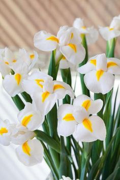 """Holländische Iris 'Casablanca' (Bildquelle: Blumenbüro Holland) Die Verwendung dieses Bildes ist für redaktionelle Zwecke honorarfrei. Veröffentlichung bitte unter Quellenangabe: """"obs/Blumenbüro Holland"""""""