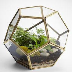 polygon glass terrarium