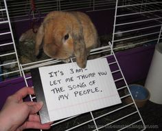 "Rabbit LOL! ""Let Me Thump You The Song Of My People"""