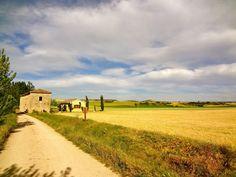 Look: Fields camino de santiago spain