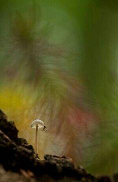 Маленький паучок - маленький грибок