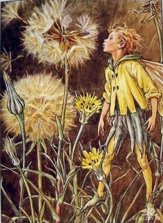 The Flower Fairies / The Jack Go To Bed At Noon Fairy / Book Illustration / 1997 / By Cicely Mary Barker / Original Book Page / nursery Art Cicely Mary Barker, Grass Flower, Kobold, Psy Art, Fairy Pictures, Vintage Fairies, Love Fairy, Beautiful Fairies, Flower Fairies