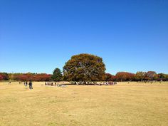 Picnic #flickr #photo #iphoneography #japan