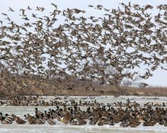 Prairie Island Waterfowl and Upland- Waterfowl hunting land for sale in Nebraska