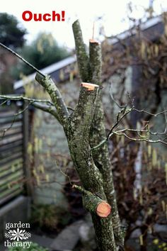 7 Awesome Pruning images | Flowers, Flowers garden, Garden