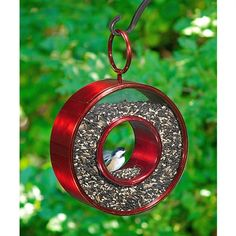 Fly-Thru Circle Bird Feeder - Ruby Red.  Uniquely designed to lure birds in for a snack and help birders favorite activity last all day long, the Fly-Thru Bird Feeder by Good Directions combines simplicity with elegance. The long-lasting ruby-red finish, makes this bird feeder the perfect addition to any garden setting. #rubyred #birdfeeder #birdseed