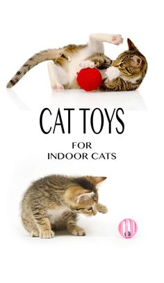 Our pick of the best cat toys for indoor cats - plus great tips for keeping your kitty entertained