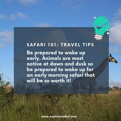 When on safari, early mornings are best to experience a game drive when the animals are most active! It's an experience you wouldn't want to miss out on. Find these tips and more on our website. #explorer #explorersafari #luxurysafari #africa #safari #safaritips #traveltips #explore #travel #traveltoafrica #adventures #safari101 #wheninafrica #bucketlist #tips #bestofsafari #wildlife #nature #outdoors Wildlife Safari, Wildlife Nature, Private Safari, Dawn And Dusk, Explore Travel, How To Wake Up Early, Africa Travel, Early Morning, Mornings