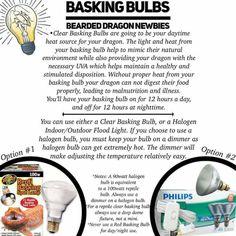 Fancy Bearded Dragon, Bulb, Onions, Light Bulb, Light Globes