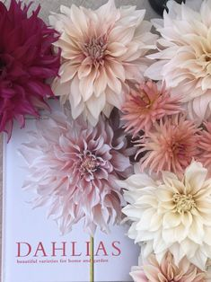 As we are in the midst of dahlia season, I was delighted to host Georgianna Lane at my home and see her new book, a definitive guide to dahlias! Cut Flower Garden, Flower Farm, Dahlia Flower, My Flower, Dahlia Bouquet, Black Flowers, Beautiful Flowers, Rare Flowers, Growing Dahlias