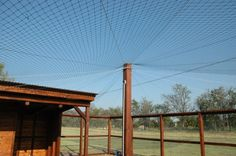 Mesh held up by wire cables to keep hawks out of chicken enclosure. Would also work over a small dogs/puppies run.