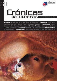 Crónicas ganaderas 31  Revista editada por Innovamk sobre ganado vacuno, mejora genética e inseminación artificial.