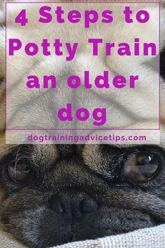 4 Steps to Potty Train an older dog | Dog Training Tips | Dog Obedience Training | Housebreaking your dog | http://www.dogtrainingadvicetips.com/4-steps-potty-train-older-dog